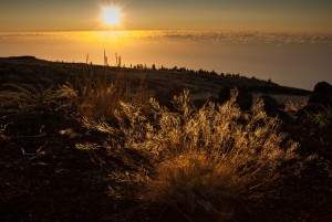 "HJM, La Palma, ""Der Blick nach Westen"""